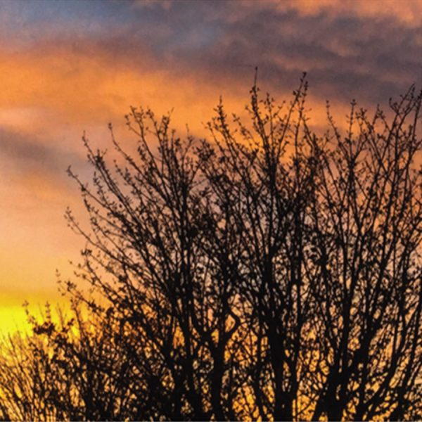 Sunset skys through the trees