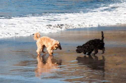 Talisker-Bay_Dogs