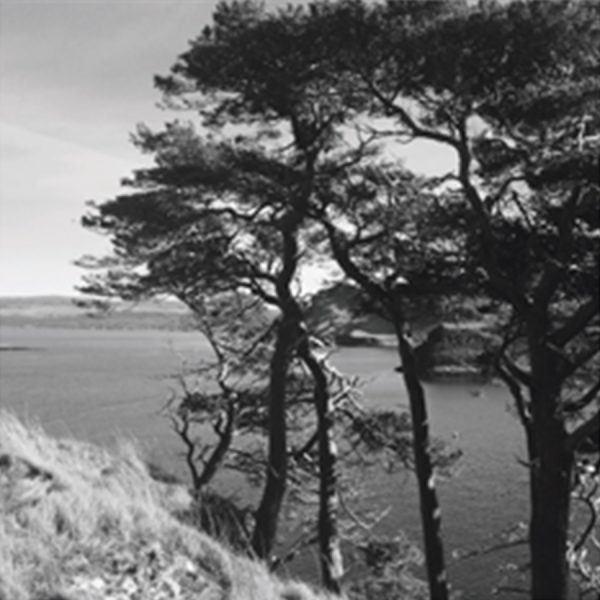 Trees over the bay