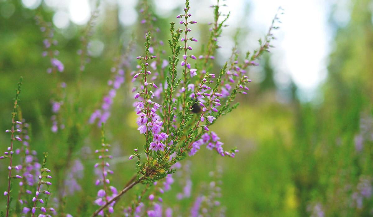 skye soap heather flower power blog