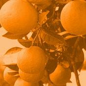 sweet_orange2